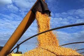 B3 começa a 5ªfeira operando em campo misto para futuros do milho