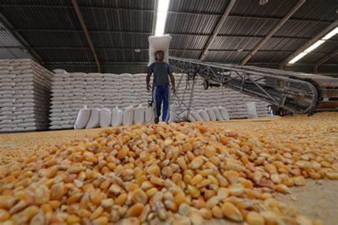 Demanda mantém valores do milho em alta