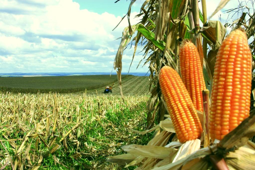 Alta do milho