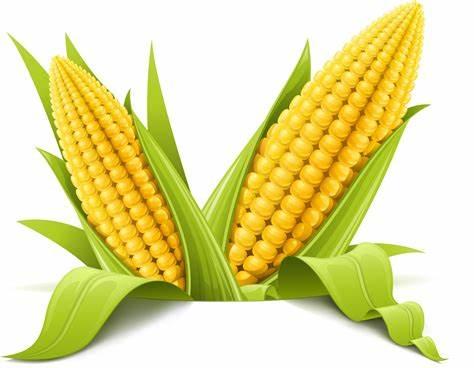 Em quanto fica o milho neste 2º semestre?
