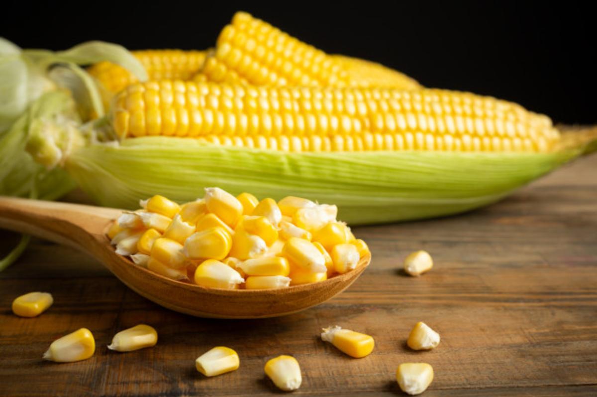 Como estão os preços do milho?